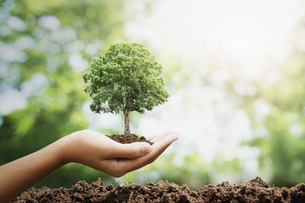 rispetto della'ambiente con biofilm e pellicole compostabili e sostenibili